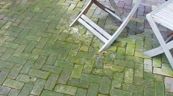 gr nbelag entfernen wie entfernen sie algen und anderen gr nbelag von ihren platten. Black Bedroom Furniture Sets. Home Design Ideas